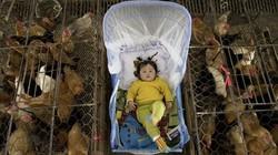 H7N9 ồ ạt tấn công Trung Quốc trước thềm năm mới