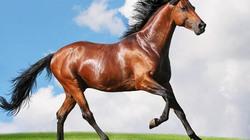 Thế giới diệu kỳ của ngựa