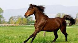 Năm Ngọ bàn chuyện các thương hiệu ngựa danh giá