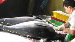 Tết về từ vựa cá Hoàng Sa - Trường Sa