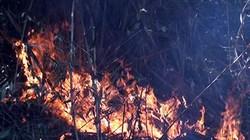 Cháy rừng ở VQG Hoàng Liên: Chủ yếu cháy cỏ lau