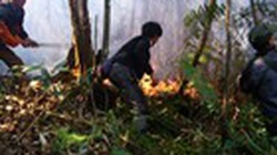 Cháy ở Vườn Quốc gia Hoàng Liên được dập tắt