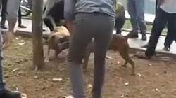 Chọi chó đẫm máu tại Thủ đô