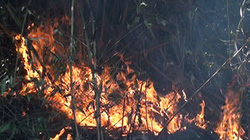 Cháy rừng lại tấn công Sa Pa