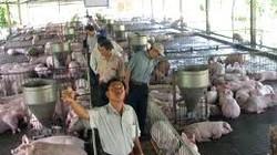 Hỗ trợ 3-5 tỷ đồng đối với cơ sở chăn nuôi gia súc