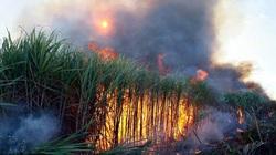 Đồng Nai: Nhiều ruộng mía cháy ngùn ngụt