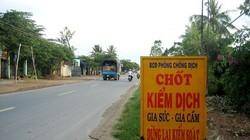 Các địa phương triển khai ngăn chặn cúm gia cầm