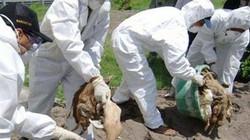 800.000USD hỗ trợ Việt Nam đối phó dịch cúm gia cầm