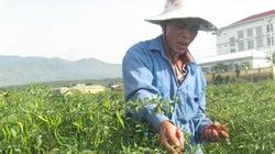 Đại Lộc (Quảng Nam): Nông dân giàu lên nhờ nông thôn mới