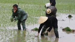 Rét đậm kéo dài: Nông dân lo chậm   thời vụ