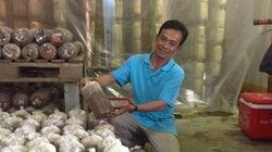 Thạc sĩ làm giàu từ trồng nấm