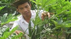 Thương lái Trung Quốc gạ nông dân trồng đậu bắp