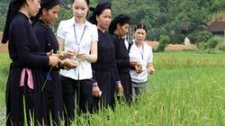 Lần đầu tiên ngân hàng nước ngoài cho vay vốn trồng lúa