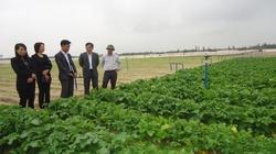 Hà Tĩnh: Tuyên truyền trồng rau trên đất cát bạc màu