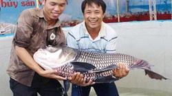 Tổ chức Festival Thủy sản Việt Nam tại Phú Yên