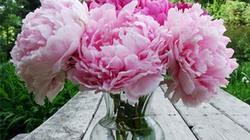 6 loài hoa mang ý nghĩa phong thủy