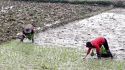 Huyện Lộc Hà (Hà Tĩnh): Gần 200ha đất lúa thiếu nước cấy