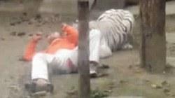 Tình nguyện nhảy vào chuồng làm mồi cho hổ