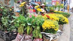 Chợ Bưởi, một tháng sáu phiên