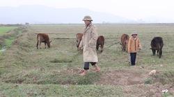 """Nông dân bỏ ruộng sau tết: """"Phao"""" khó tới tay nông dân"""