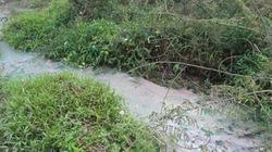 Lào Cai: Khu công nghiệp xả thải, người lâm bệnh, trâu bò chết thảm