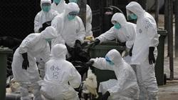 Trung Quốc: H7N9 lây lan nhanh ở tỉnh giáp Việt Nam, 1 người chết