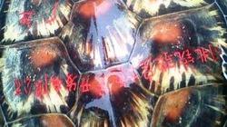 """Bắt được rùa """"lạ"""" khắc chữ Hán trên mai ở Quảng Bình"""