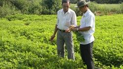 Vụ Đông Xuân tại Bình Định: Tăng diện tích cây trồng cạn