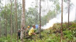Bắc Ninh: Tăng cường ứng phó nguy cơ cháy rừng