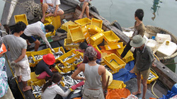 Ngư dân góp lưới vươn khơi