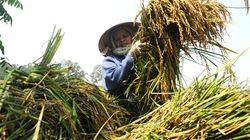 CPI thấp nhất trong 10 năm: Cần gói kích cầu cho nông thôn