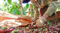 Nhiều nông sản Việt Nam tăng thị phần