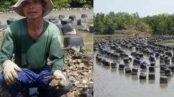 Nuôi hàu ở xã Long Hòa, huyện Cần Giờ: Ô nhiễm môi trường chực chờ
