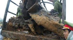 'Chia' cho người phát hiện gốc gỗ sưa 10%, Quảng Bình có làm đúng qui định?
