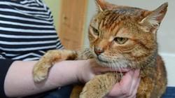 Kỳ diệu mèo cưng đoàn tụ với chủ nhân sau 11 năm mất tích