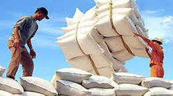 Cơ hội bán gạo Việt cho Cameroon