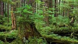 Nữ sinh viên lạc trong rừng, tử vong khi đi thực tế