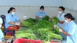 Hỗ trợ nông dân sản xuất rau an toàn