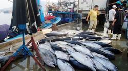 Ngư dân đánh bắt ở Hoàng Sa bội thu