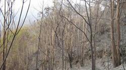 19 tỉnh có nguy cơ cháy rừng cực kỳ nguy hiểm