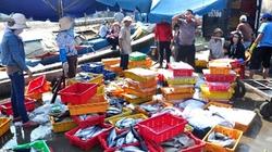 Phú Yên: Bến cảng thành chợ đầu mối hải sản