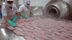 ĐBSCL phấn đấu xuất khẩu cá tra đạt 1,75 tỷ USD