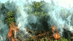 Tăng cường phòng, chống cháy rừng