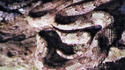 """Hãi hùng gặp rắn """"thiêng"""" có mào ở Tràng An"""