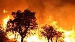 Gió hanh khô thổi mạnh, cháy Vườn Quốc gia Hoàng Liên
