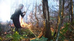 Trên 500 người chữa cháy Vườn Quốc gia Hoàng Liên