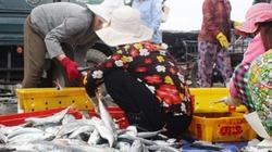 Quảng Ngãi: Ngư dân trúng cá sòng và cá nục gai