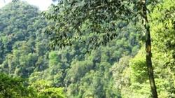Bình Định: Rừng An Toàn lâm nguy