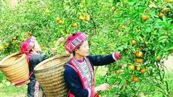 Tuyên Quang: Sẽ giảm hơn 8.100 hộ nghèo