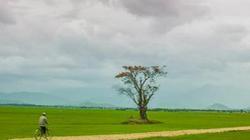 Thời tiết nông vụ miền Trung-Tây Nguyên từ 11 đến 20.3